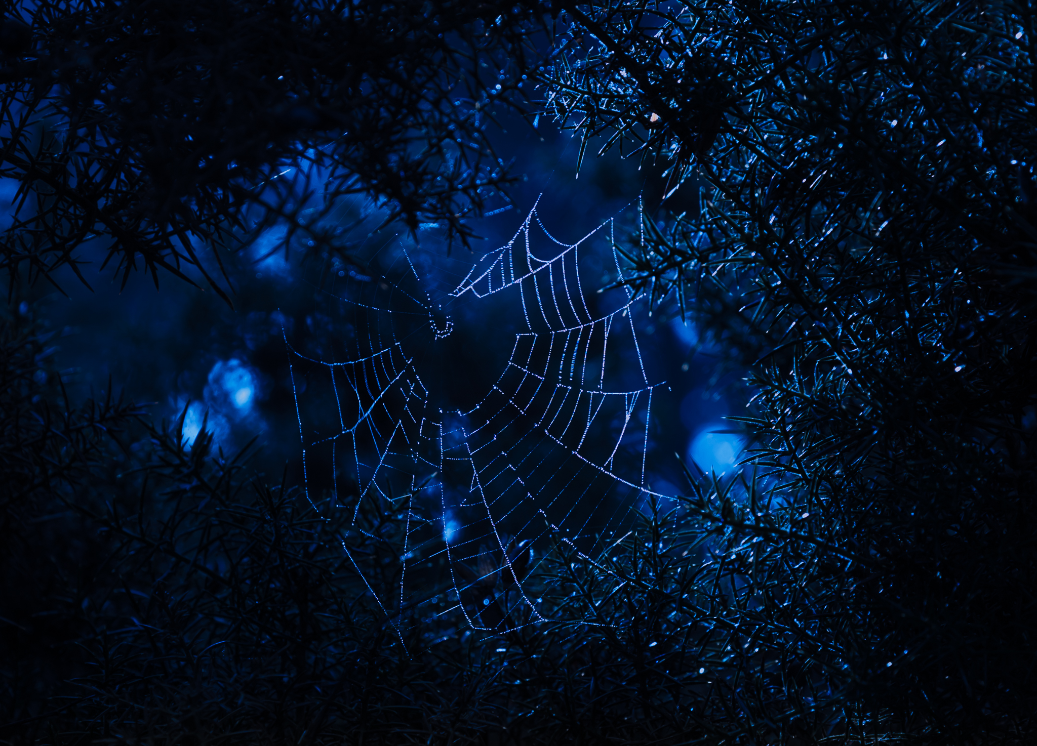 A spider had managed to create a web in a gap in a thickly branched bush. I saw the web limned with light from the moon and thought it provided a great picture.
