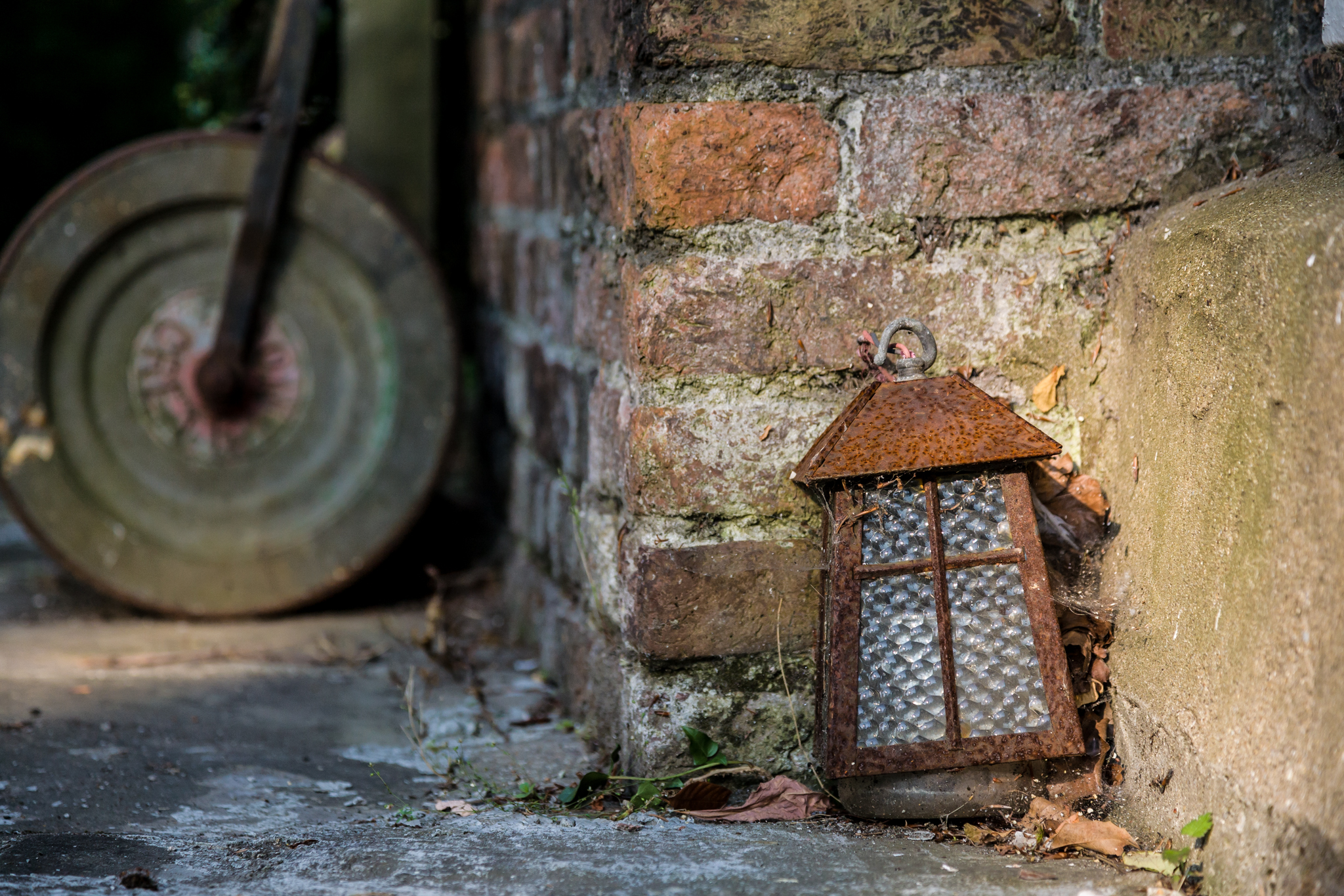 This storm lantern had been left neglected in a corner of a garden for many decades and had become home to many spiders and other insects.