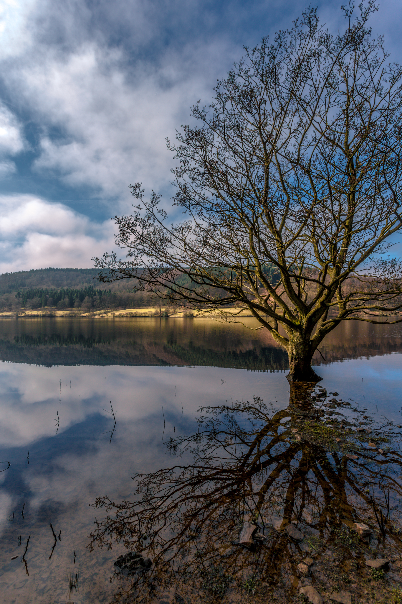 I came across this tree living happily on the side of the lake. The way the light was it created a great reflection and there was a lovely reflection from the land in the background too. It looked slightly surreal to me so I thought it would make a nice picture.