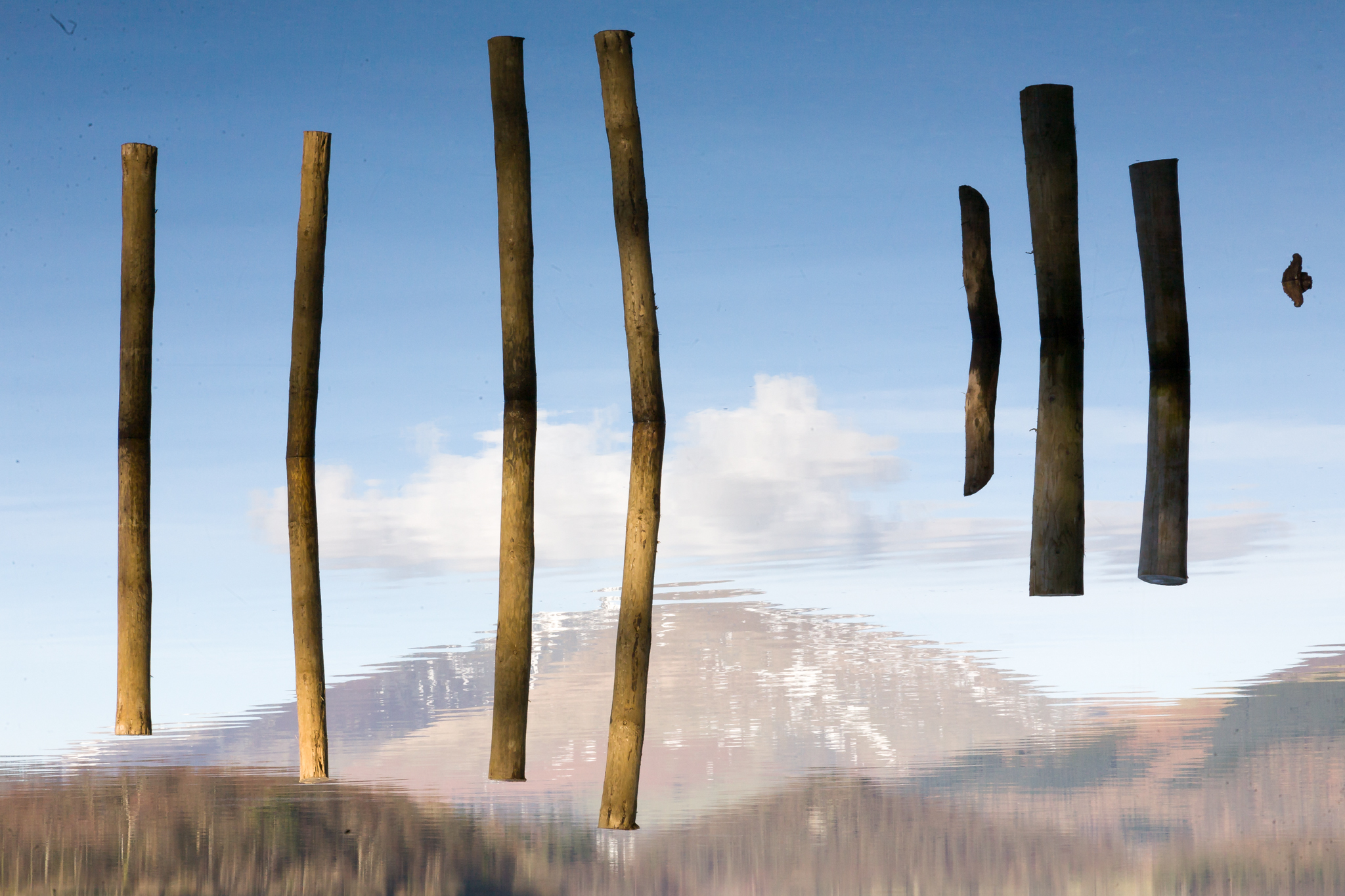 These wood stakes or posts were probably part of an old long gone jetty. They remain upright in the water and on a still day they are reflected as if in a mirror, so that you cna barely tell which way is up. Taken at Derwent water, Keswick, in the English Lake District.